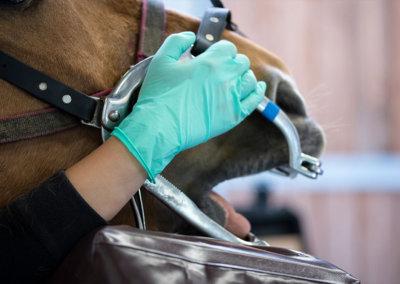dentisterie-equine-4
