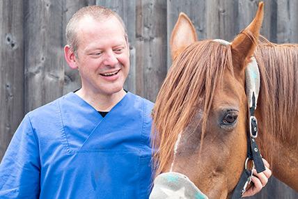Dentiste pour chevaux