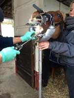 dentisterie-veterinaire