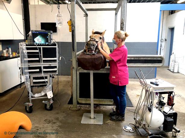 dentisterie equine avancee