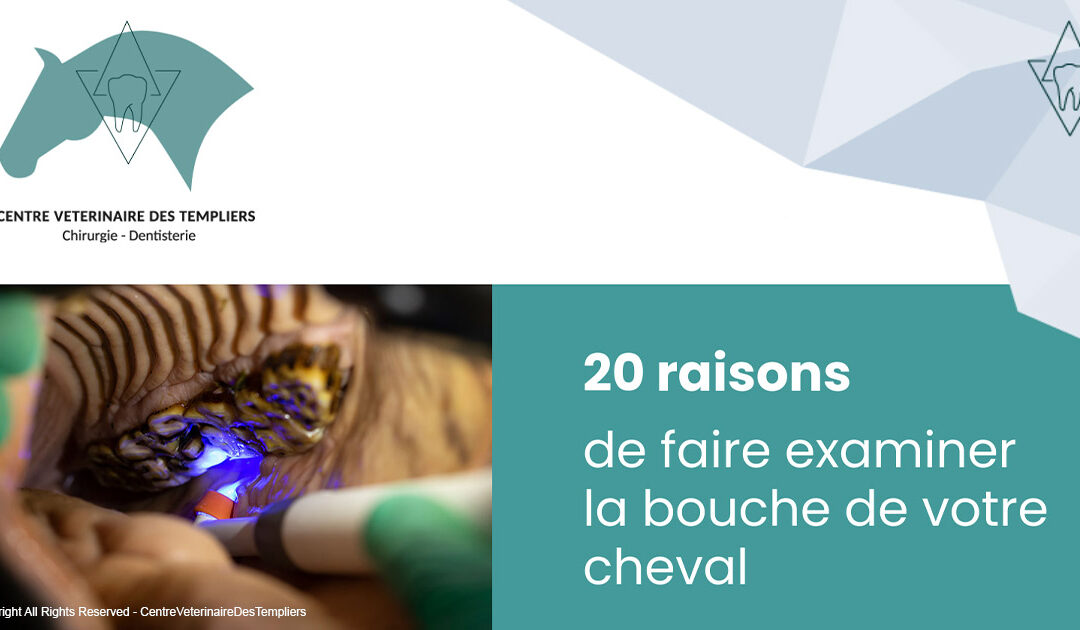 infographie bouche cheval
